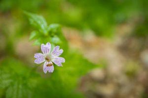 fotografare fiori
